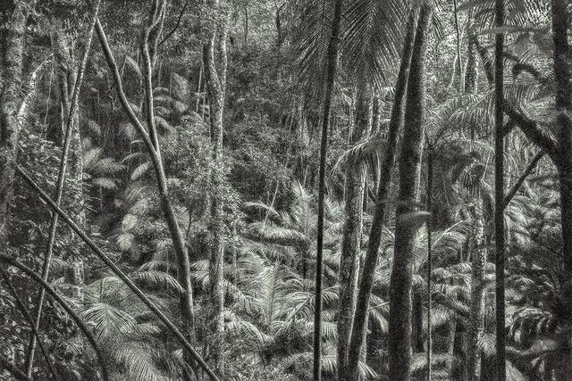 , 'Viagem Pitoresca pelo Brasil #8,' 2016, Mario Cohen