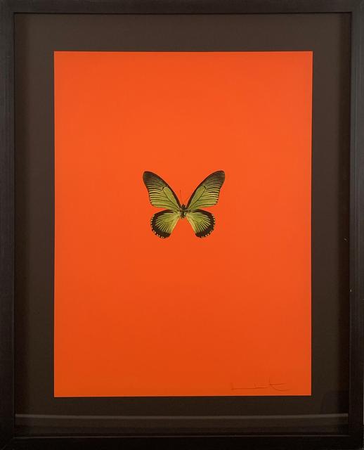 Damien Hirst, 'Six Butterflies I', 2011, DTR Modern Galleries