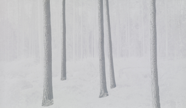 , 'tree; Finland-002-a. From the 1 two tree project,' 2013-2016, Johan Deumens Gallery