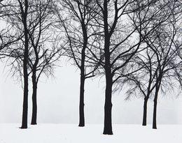 Harry Callahan, 'Chicago (Trees in Snow)', 1950, Robert Mann Gallery