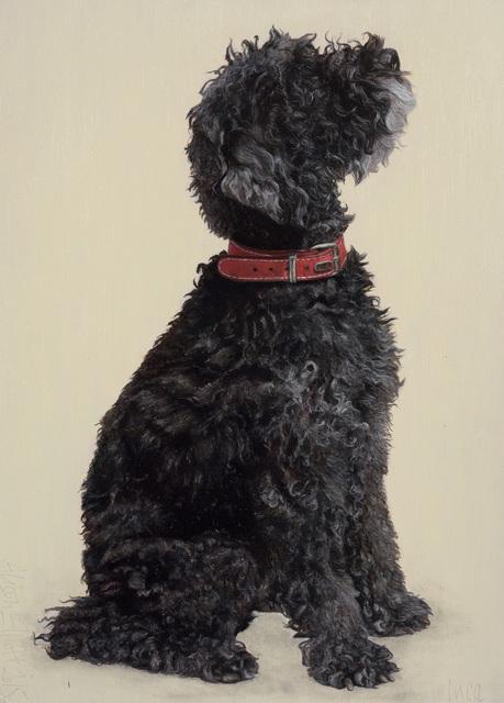 , 'Inca (Miniature Poodle) ,' , Jonathan Cooper