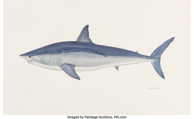 Flick Ford, 'Shortfin Blue Mako Shark,  Big: The 50 Greatest World Record Catches interior illustration', 2008, Heritage Auctions