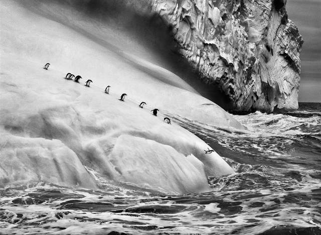 , 'Chinstrap penguins dive off icebergs located between Zavodovski and Visokoi islands in the South Sandwich Islands,' 2009, Yancey Richardson Gallery