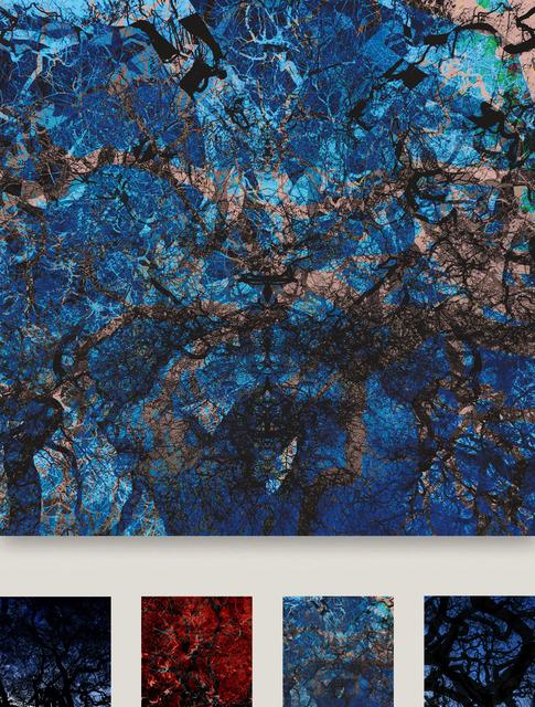 , 'Vegetafracta #12 Serie,' , Galerie Calderone