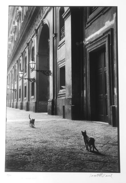 , 'Cats, Naples, Italy,' 1956, 99Prints