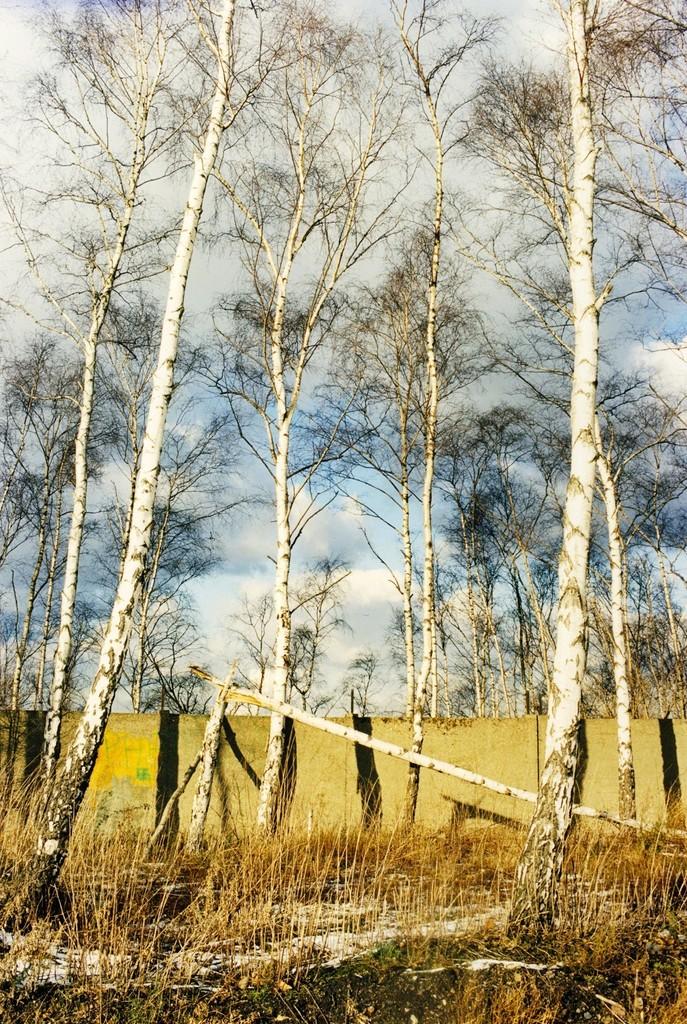 Jitka Hanzlová, 'Untitled (North/South),' 1998, Yancey Richardson Gallery