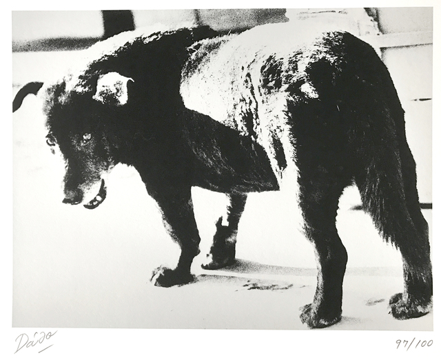 , 'Stray dog, Misawa,' 1971, 99Prints