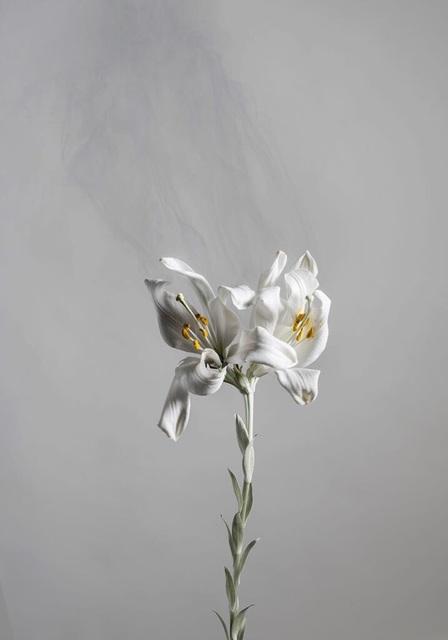 Ori Gersht, 'Lilium candidum D05', 2018, Photography, Archival pigment print, Talley Dunn Gallery