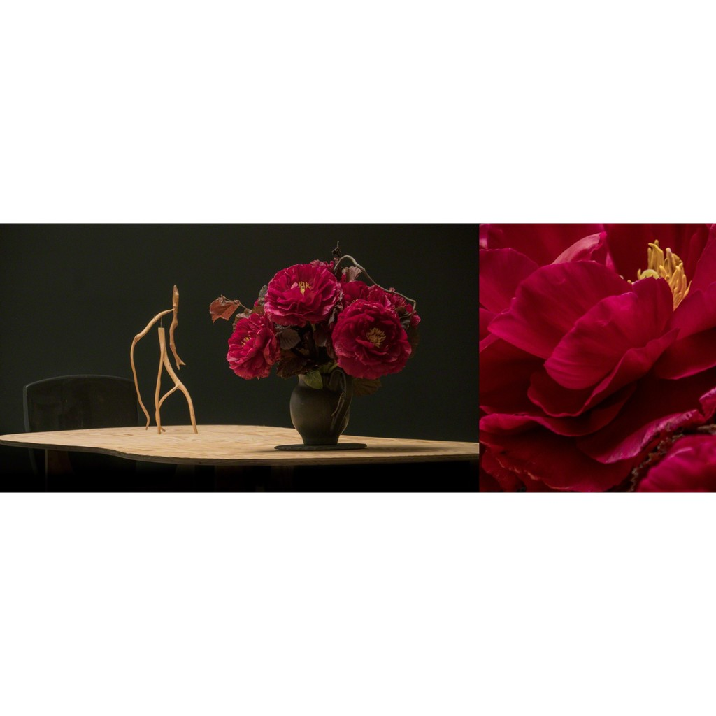Composition #1.5 by Bella Meyer and Garret Linn - Fleurs Bella, Table and sculpture Jacques Jarrige. Photo Garret Linn