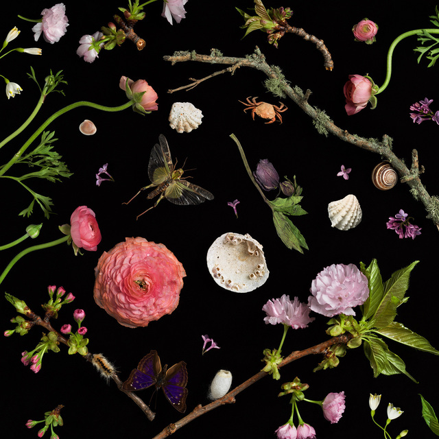 , 'Botanical I (Cherry Blossoms),' 2013, Robert Mann Gallery