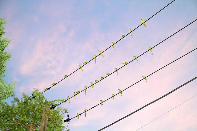, 'Tokyo Parrots 005,' 2013, CHRISTOPHE GUYE GALERIE