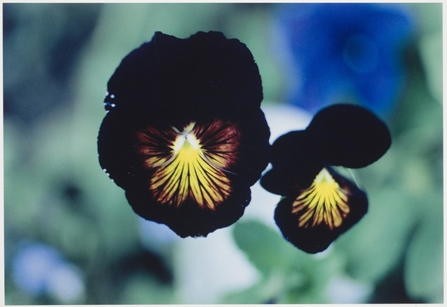 , 'Violas, Colorado,' 1983, Atlas Gallery