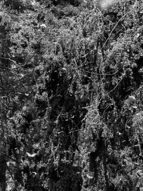 , 'Kaleidoscope Landscape (Symmetries II),' 2019, Galleria Heino