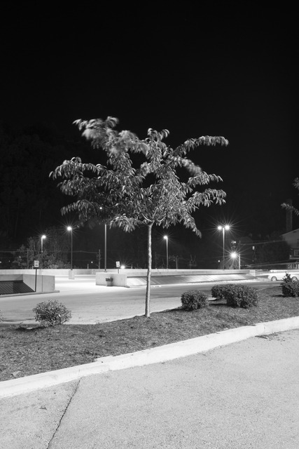 , 'Four Well Lit Trees in Texas and One in Tennessee 5,' 2015, Ro2 Art