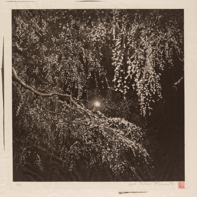 , 'A Tree in Full Bloom under the Moon at Kyoto Imperial Palace,' 2013, Micheko Galerie