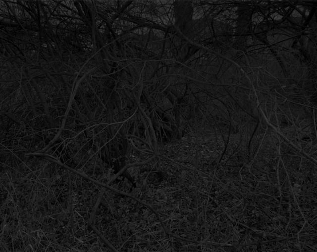 , 'Night Coming Tenderly, Black: Untitled #11 (Bent Branches),' 2017, Rena Bransten Gallery