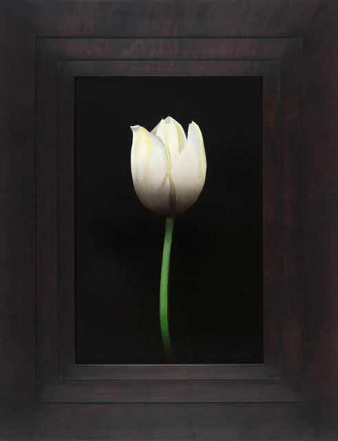 , 'Untitled (tulip) ,' 2014, Nancy Hoffman Gallery
