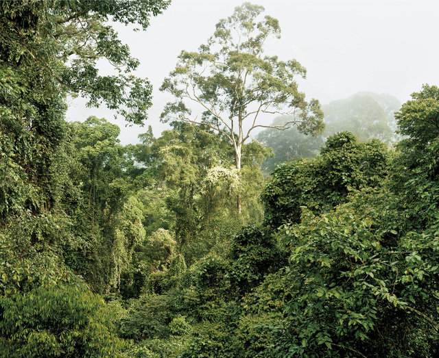 , 'Primary forest 06, Malaysia,' 2012, Galerie f5,6