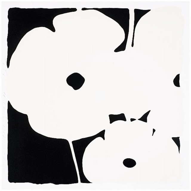 , 'Poppies, June 3, 2011 (White),' 2011, michael lisi / contemporary art