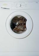 , 'Washing Machine with Leopard,' 2013, Graça Brandão