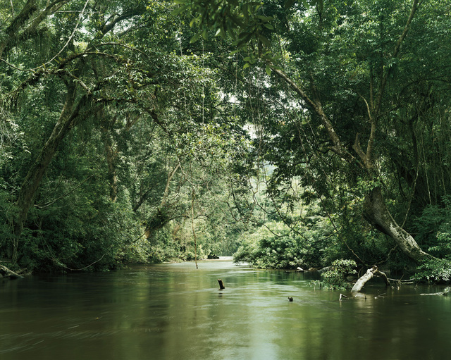 , 'Primary Forest 12, Waterway Malaysia,' 2013, Galerie f5,6