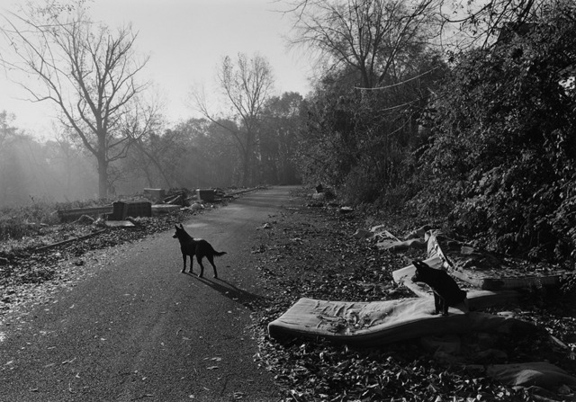 , 'Athens, GA (Dogs With Mattresses),' 1997, Wirtz Art