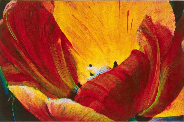 , ''Golden Tulip',' 2015, Australian Print Workshop