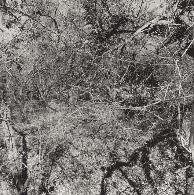 , 'Arizona,' 1999, Pace/MacGill Gallery