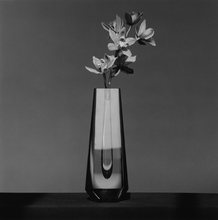 , 'Orchid,' 1982, Mai 36 Galerie