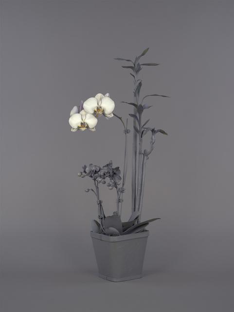, 'Neutral Orchids (Phalaenopsis + Dracaena sanderana),' 2016, RYAN LEE