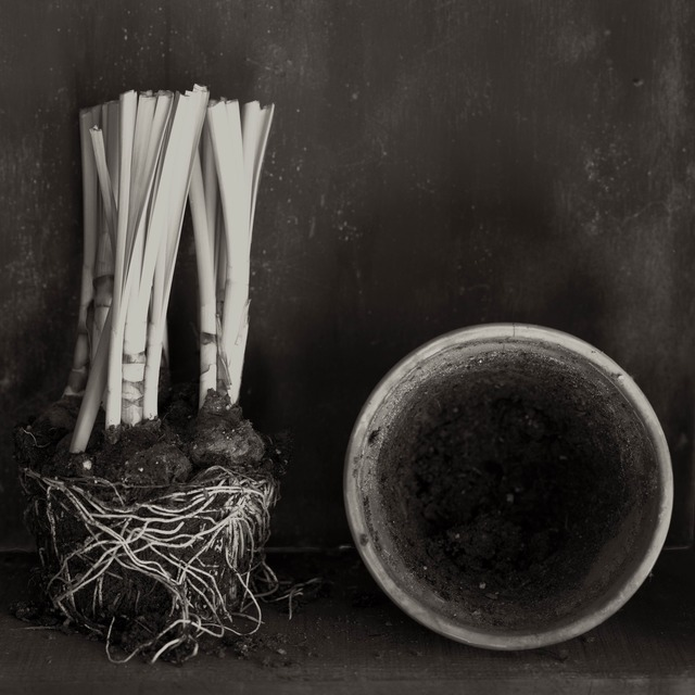 Zoë Zimmerman, 'Narcissus Aging', 2006, photo-eye Gallery
