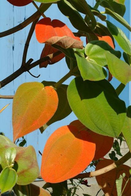 , 'Montréal botanique #10,' 2004, Christophe Guye Galerie