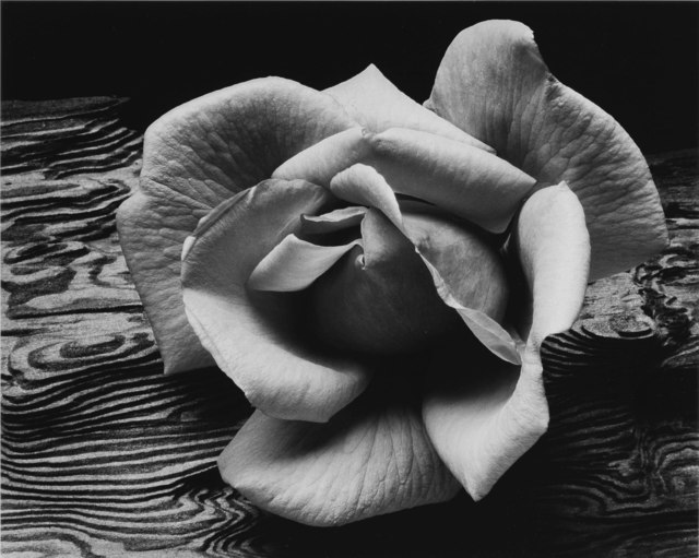 Ansel Adams, 'Rose and Driftwood', 1932, Weston Gallery