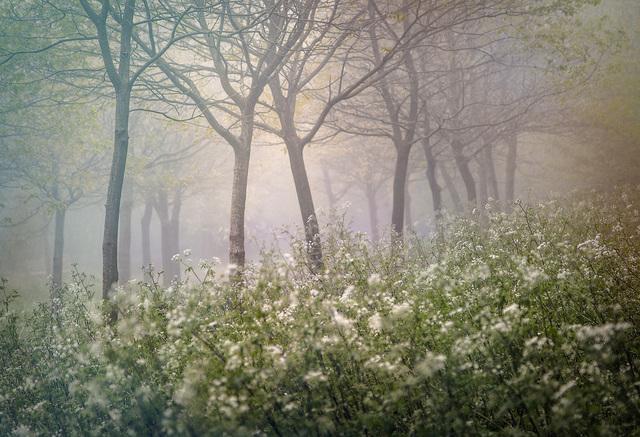 Valda Bailey, 'Bounteous Morn', 2012-2019, Sohn Fine Art