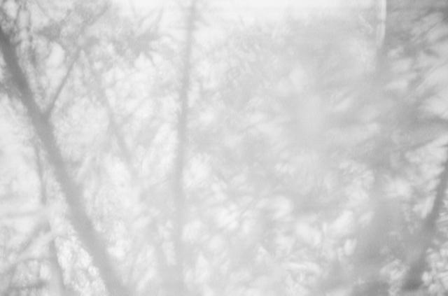, 'Salix Alba IV,' 2017, Galleri Duerr
