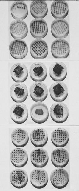 , 'Mating Reactions of Algae,' 1995, Anglim Gilbert Gallery