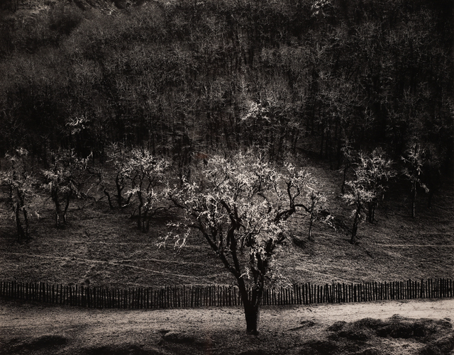 , 'Oak Tree Rain, Sonoma County,' 1960, Seagrave Gallery