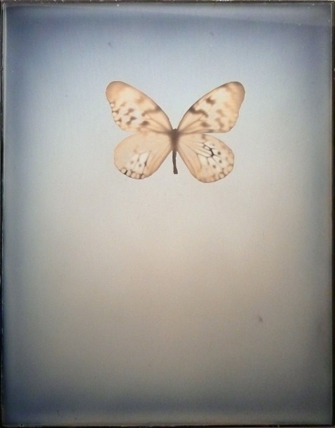 Adam Fuss, 'Untitled', 2009, Fraenkel Gallery