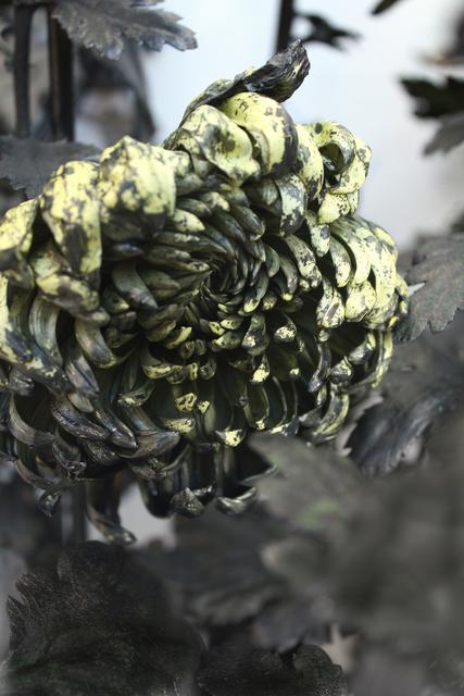 , 'In Furious Bloom,' 2012, Ink Studio