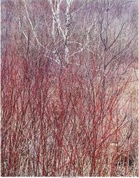 In the Wilderness Portfolio (ten photographs)