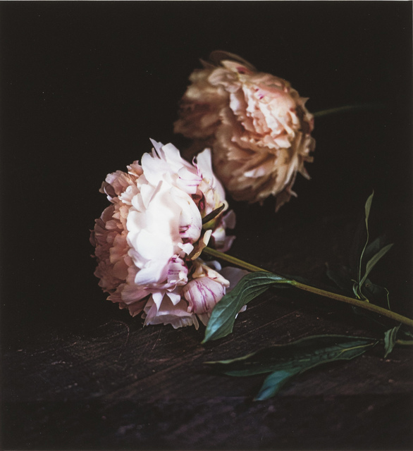 Craigie Horsfield, 'Two Peonies, Via Chiatamone, Naples, May 2010', 2014, Monica De Cardenas