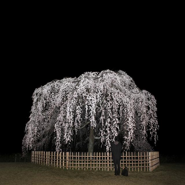 , 'Hanami: Nightcall,' 2015, CONRADS