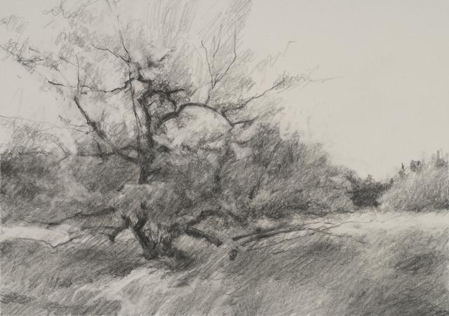 , 'Orchard #1,' , Dowling Walsh