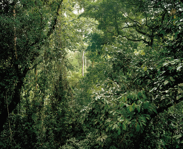 , 'Primary forest 08, canopy, Malaysia,' 2012, Galerie f5,6