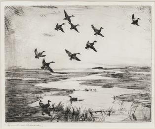 Ipswich Marshes