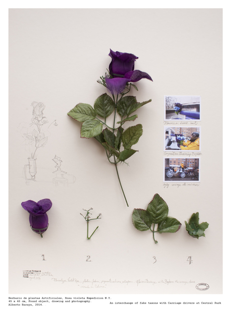 , 'Rosa Violeta (Expedition N.Y.) - Herbario de Plantas Artificiales,' 2014, Instituto de Visión