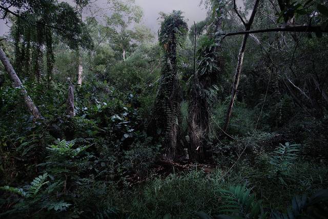 Erica Lai, 'The Gardens Series No. 6,' 2007-2009, Pearl Lam Galleries