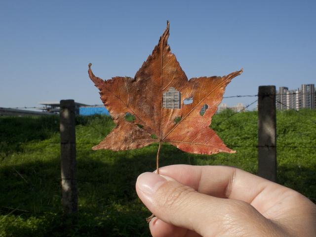 , 'Leaf holes no.6,' 2011, TKG+