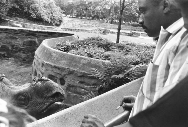 , 'Bronx Zoo, New York,' 1963, Etherton Gallery