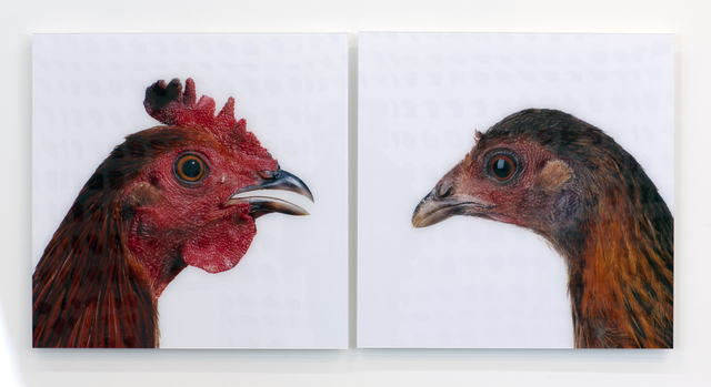 , 'Red Jungle Fowl,' 2013, CONNERSMITH.